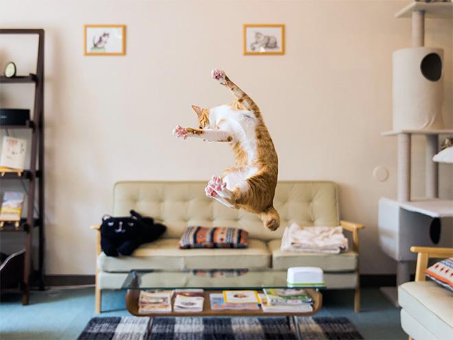 Cat alien abduction in action.
