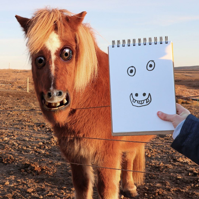 Horse doodle recreated as a real living thing.