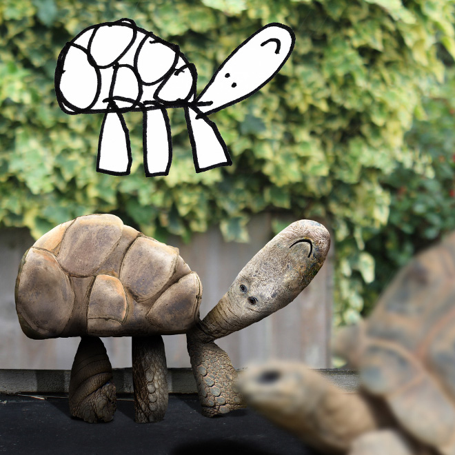 Tortoise doodle recreated as a real living thing.