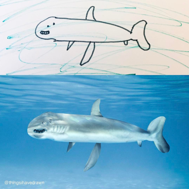Shark doodle recreated as a real living thing.