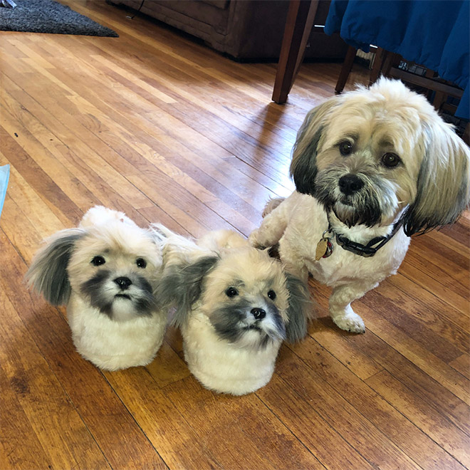 Dog posing with slippers that look just like him.