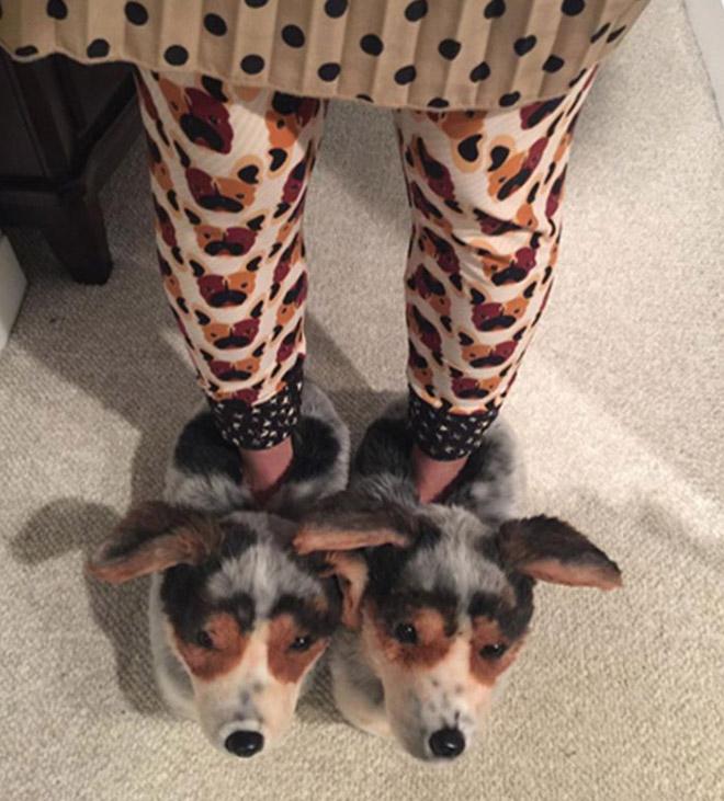 Realistic lifelike dog slippers.