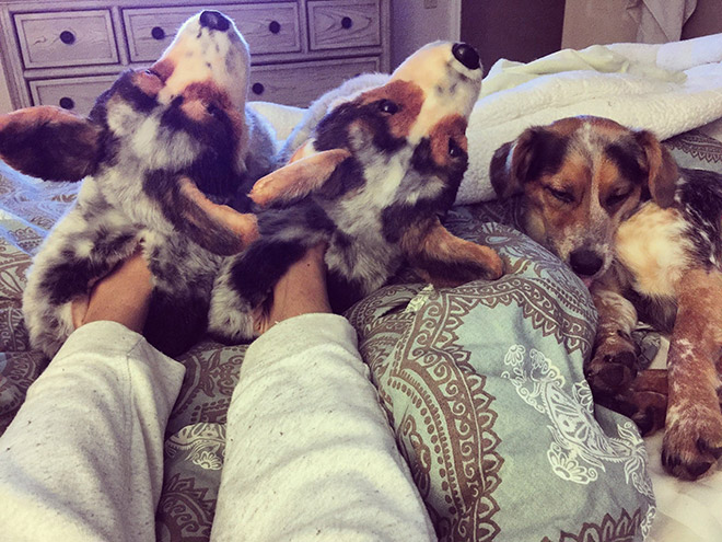 Realistic dog slippers.