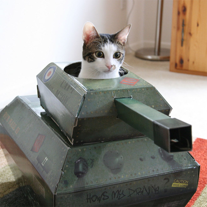 Cat in a main battle tank.