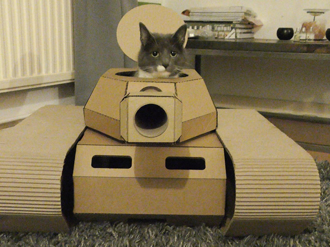 Cat posing in his tank.