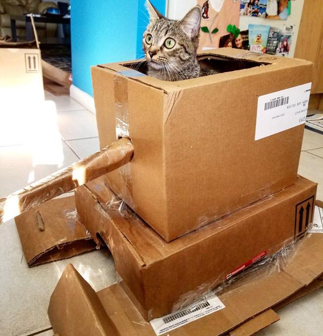 Cat in a cardboard tank.