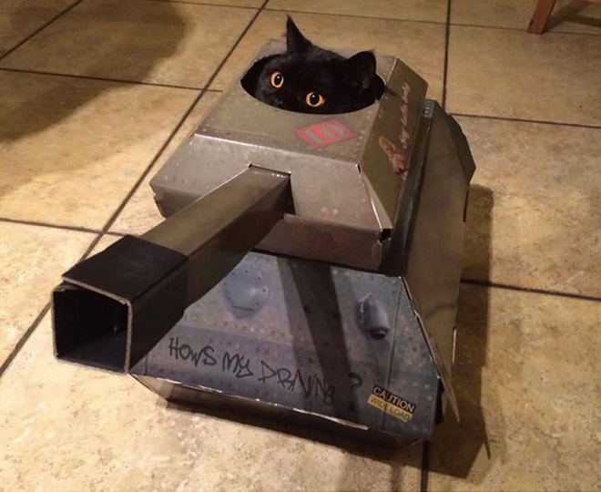 Cat in a DIY cardboard tank.