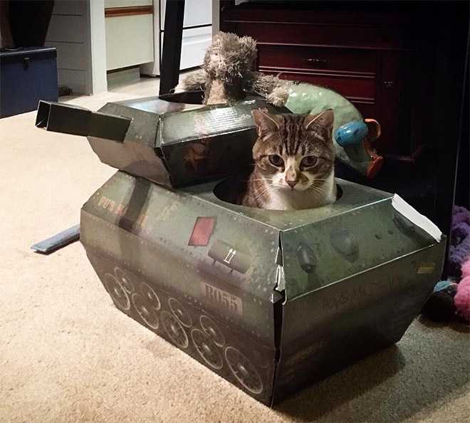 Cat in a cardboard army tank.