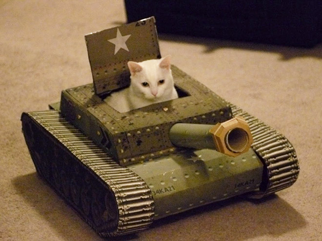 Cat tank army commander.