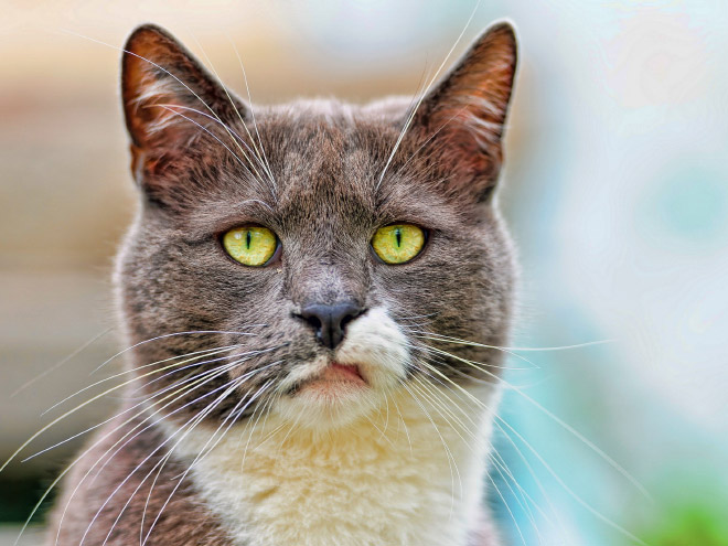 This cat hates your guts.