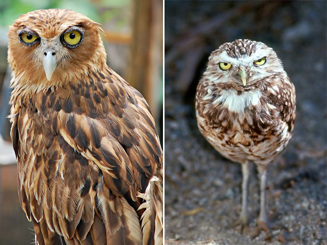 These owls are disappointed in you.