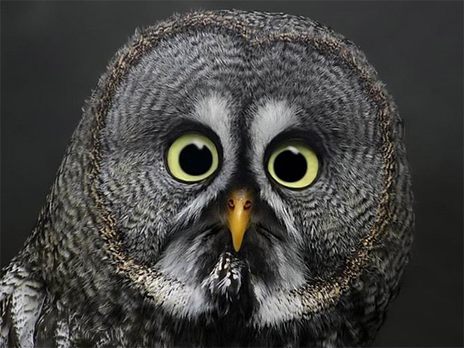 This owl hates you.