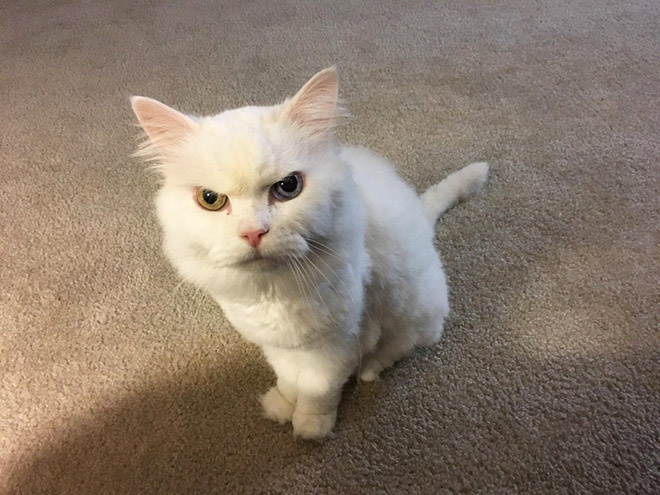 This cat hates you.