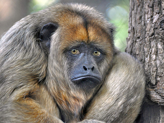 This monkey is disappointed in you.