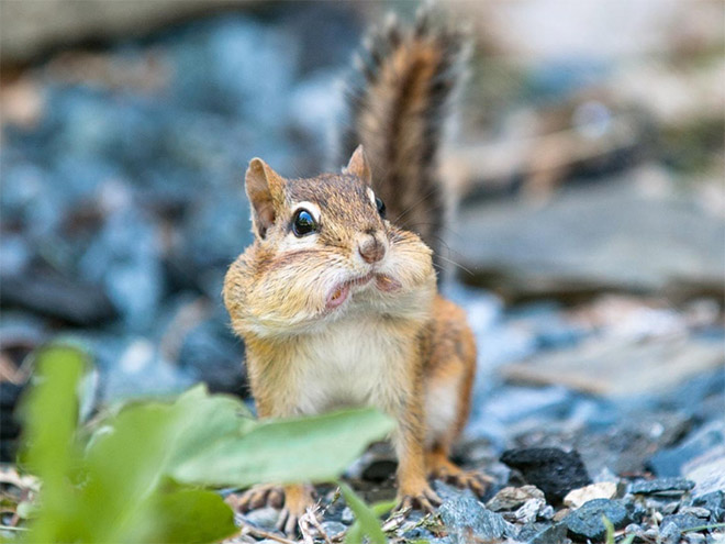 This squirrel is disappointed in you.