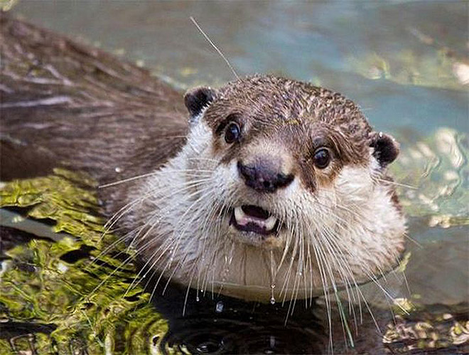 This otter is disappointed in you.