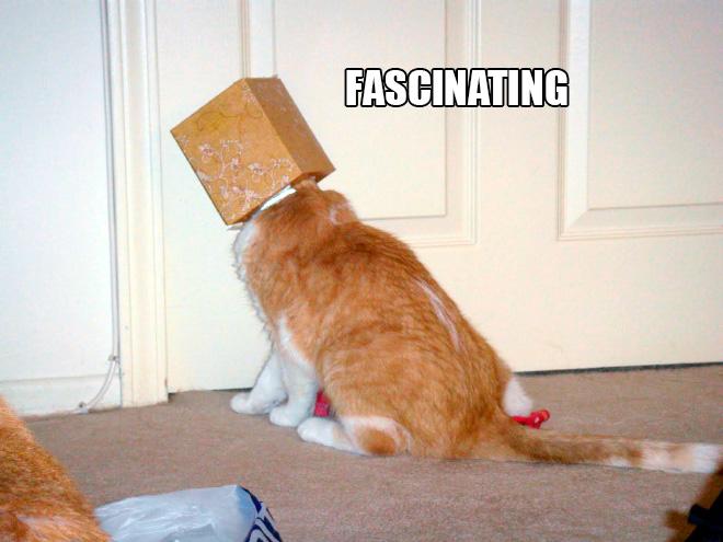 Cat scientist in action.