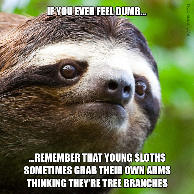 ...remember that young sloths sometimes grab their own arms thinking they're tree branches.
