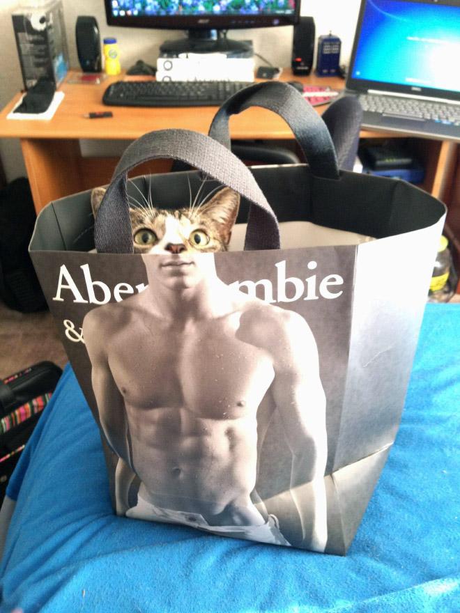 Hilarious cat in Abercrombie bag.