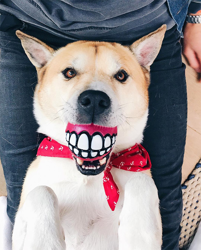 Teeth ball is the funniest dog toy ever.