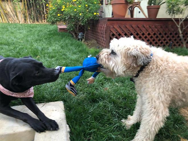 Dog attacking Donald Trump.