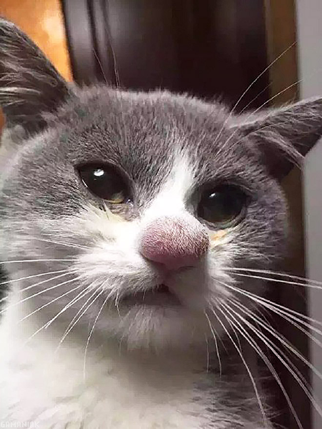 Bees vs. cats: the aftermath.