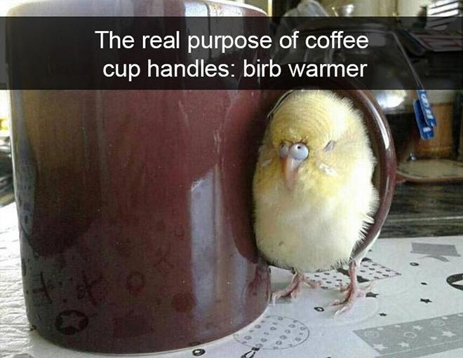 Hilarious bird snapchat.