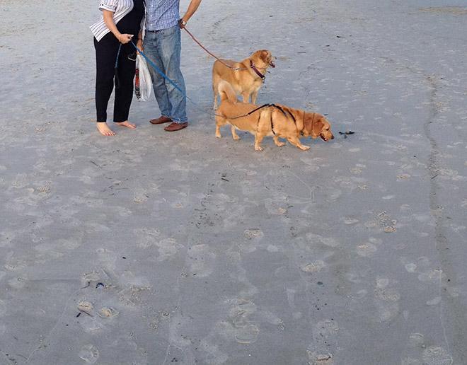 Funny failed dog panoramic photo.