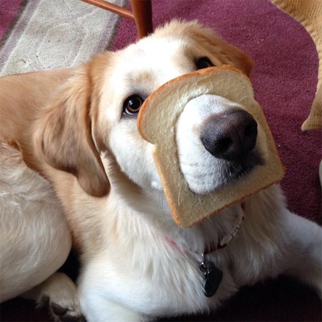 Inbread dog.
