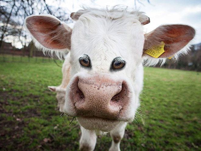 Wouldn't animals look weird with eyes at the front - like humans?