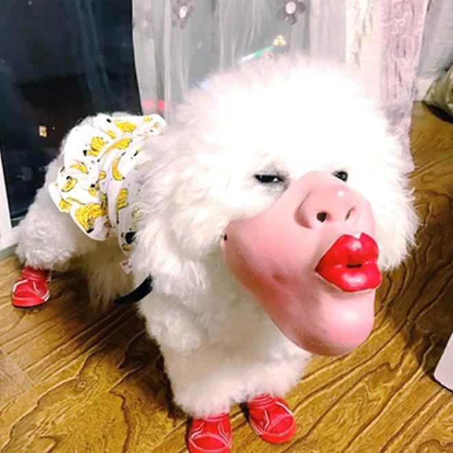 Creepy dog mask.