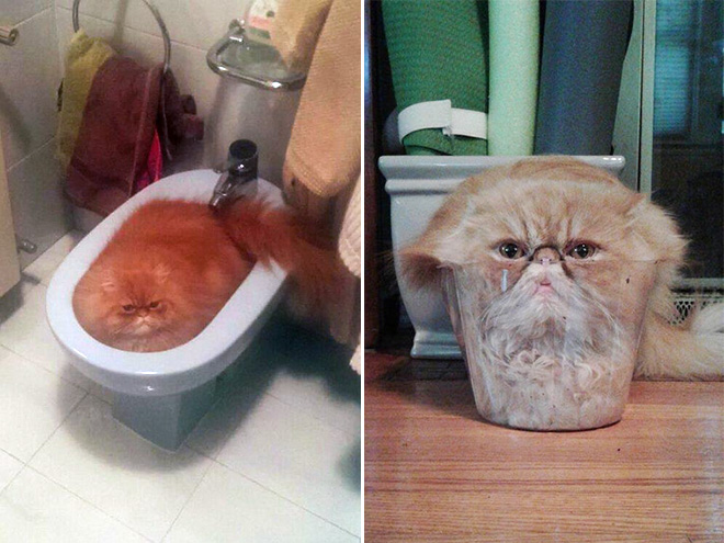 Melted cats.