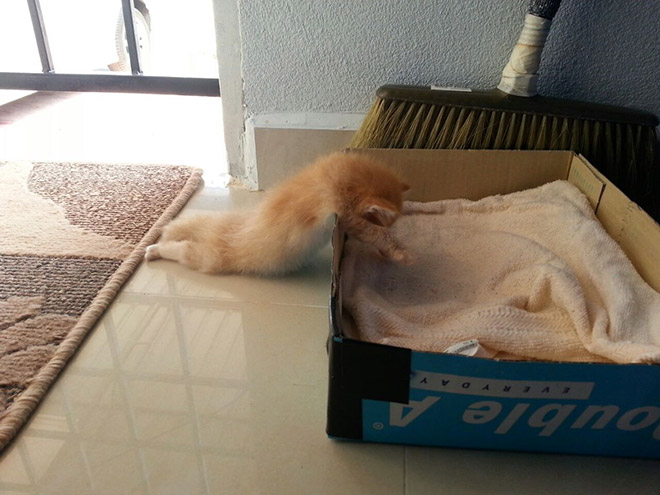 Is this cat melting?