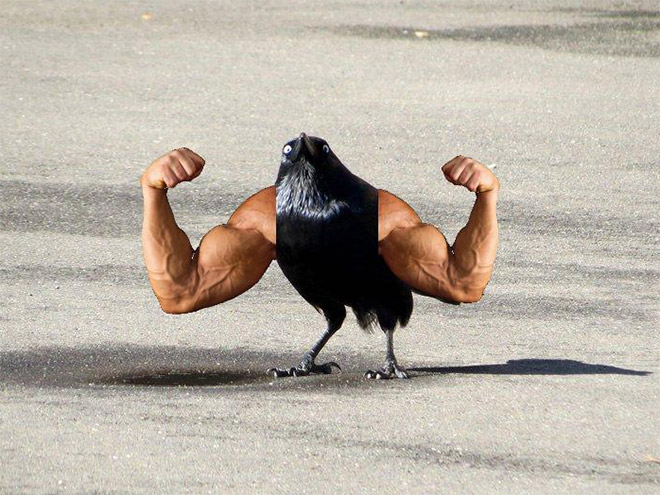 Birds look so much cooler with human arms!