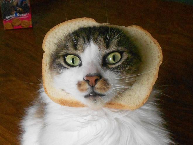 Inbread cat.
