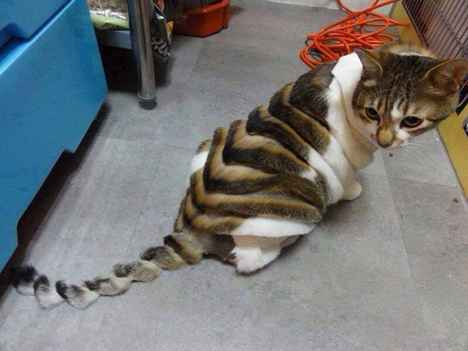 Crazy cat haircut.
