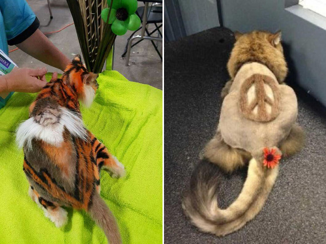 Crazy cat haircuts.