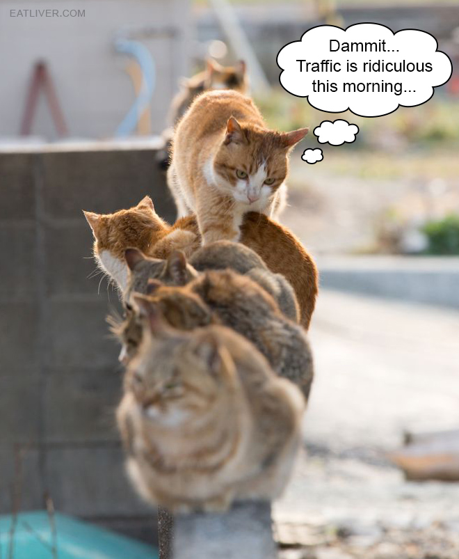 Cat traffic jam is a real problem many humans are not aware of.