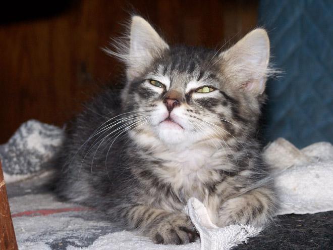 Funny sneezing cat.