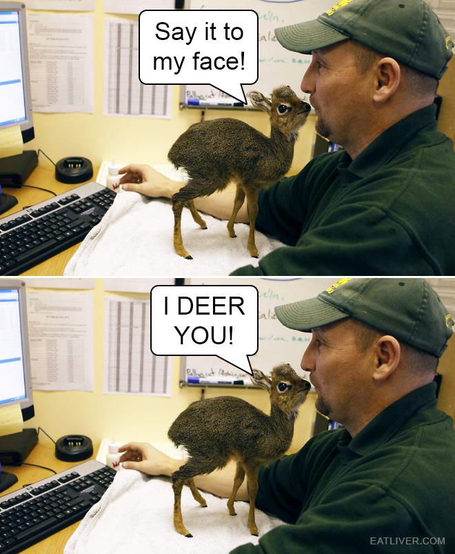 Deer pun.