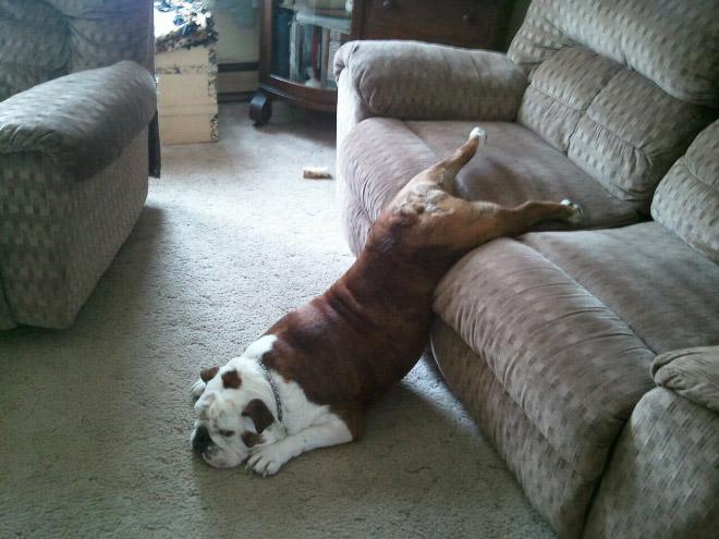 Dogs can sleep literally anywhere.