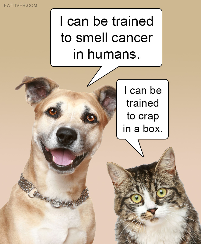 Cats vs. dogs.