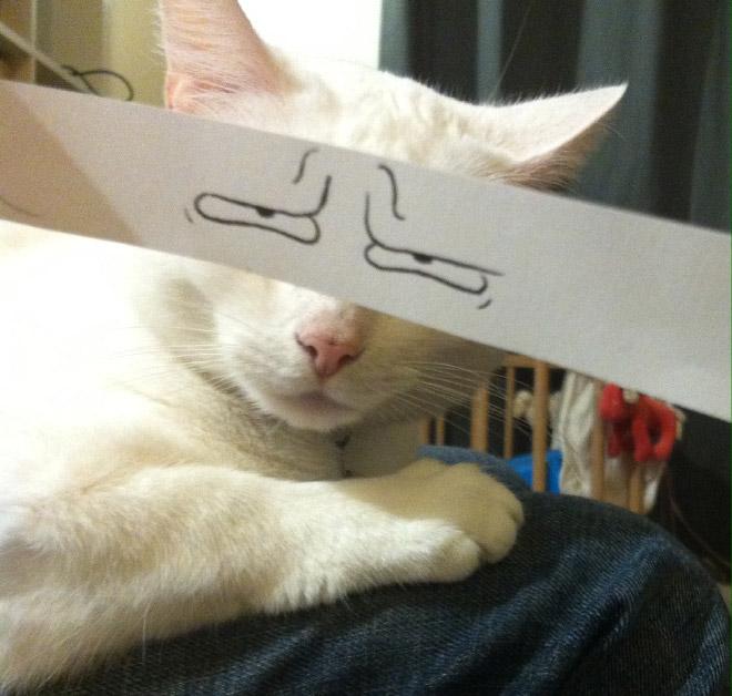 Cartoon eyes look hilarious on a cat.