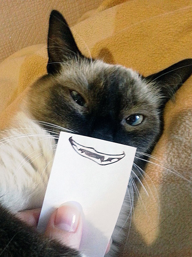 Cats with cartoon mouths are the best cats.