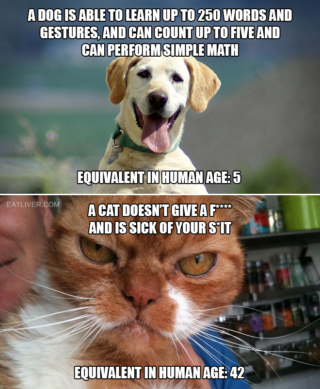 How smart are pets?