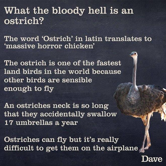 Proper description.