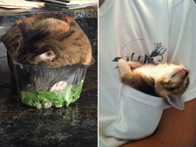 Cats can sleep literally anywhere.