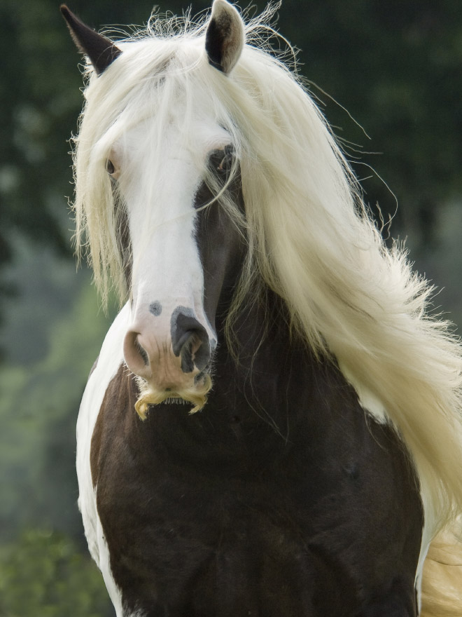 Did you know that horses can grow mustaches?