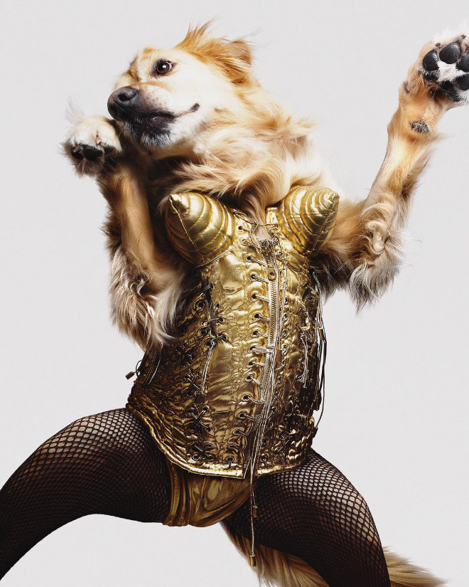 Iconic photo of Madonna recreated by a dog.