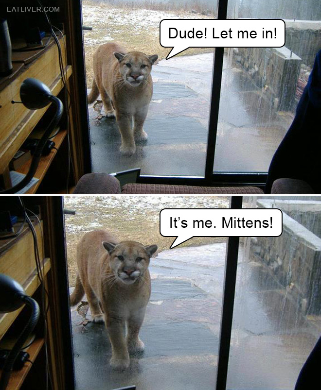 Dude... Let me in!